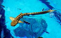 Grand Aquarium Poema del Mar celebrates its 2nd anniversary